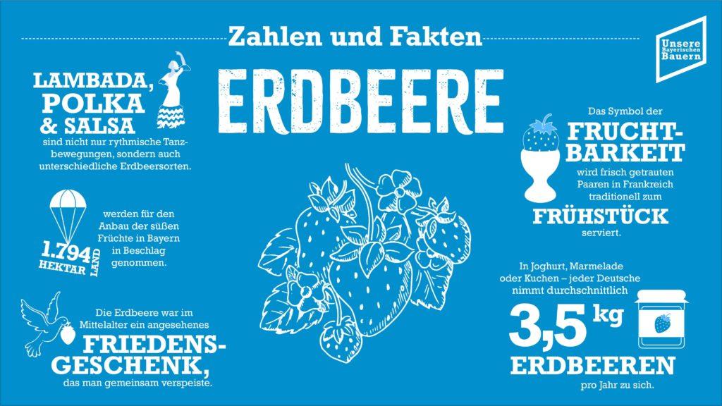 Foto: Information Erdbeere neu