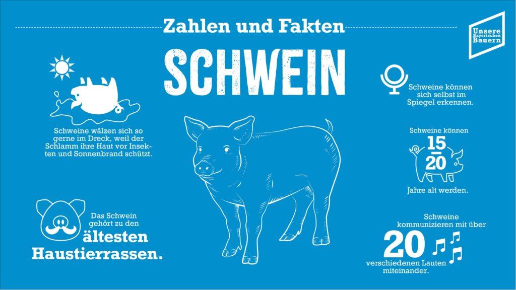 Foto: Informationen Schwein neu